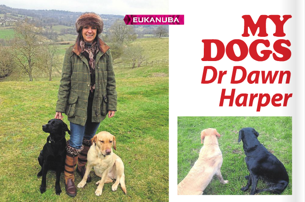 Dr Dawn with her Labradors